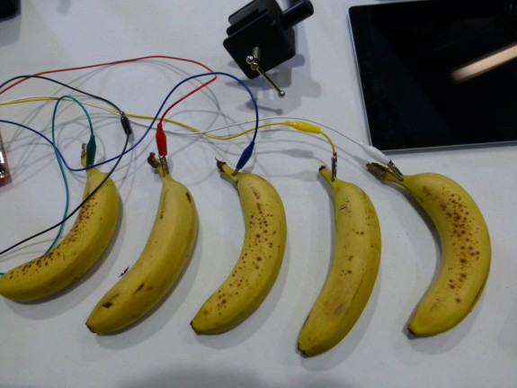Bananas with electronic wires attached