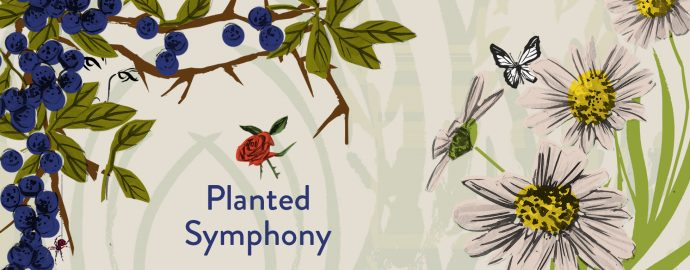 Illustrations of flowers, daisies, blackthorn and a butterfly. Text says Planted Symphony.