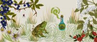 A collage of hand-drawn illustrations of English flora like elderflower, rose and thyme. It makes up a natural country scene and in the centre are a toad and a potion bottle, adding a bit of mystery.